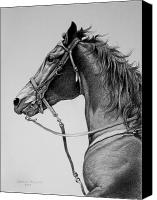 Horse Drawing Canvas Prints - The Horse Canvas Print by Harvie Brown