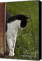 Pictures Of Cats Canvas Prints - The Hunt Canvas Print by Kim Henderson