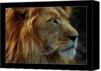 Lion Canvas Prints - The King Canvas Print by Ricky Barnard
