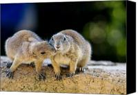 Groundhog Canvas Prints - The Kiss Canvas Print by Edward Myers