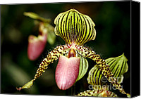 Florida Flowers Canvas Prints - The Lady Slipper Canvas Print by Sabrina L Ryan
