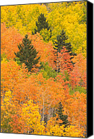 Urban Scenes Canvas Prints - The Leaves Of A Forest Change Colors Canvas Print by Ralph Lee Hopkins