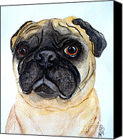 Cannine Canvas Prints - The Little Pug Canvas Print by Carol Grimes