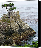 Lone Canvas Prints - The Lone Cypress - California Canvas Print by Brendan Reals
