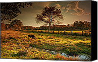 Cow Canvas Prints - The Lone Grazer Canvas Print by Robin-Lee Vieira