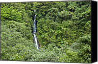 Honolulu Photo Canvas Prints - The Manoa Falls Waterfall In Honolulu Canvas Print by Stacy Gold