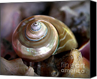 Abalone Seashell Canvas Prints - The Oceans Jewel Canvas Print by Karen Wiles