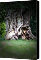 Sleepy Hollow Canvas Prints - The Old Tree  Canvas Print by Cathy  Beharriell