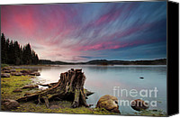 Dam Canvas Prints - The Old trunk Canvas Print by Evgeni Dinev