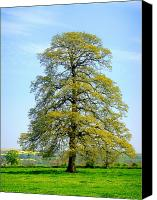Trees Canvas Prints - The Other Tree Canvas Print by Roberto Alamino