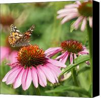 Cone Flowers Canvas Prints - The Painted Ladies Canvas Print by Ernie Echols
