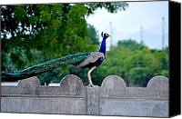 Wildlife Pyrography Canvas Prints - The Peacock Canvas Print by Gaurishankar Khatri