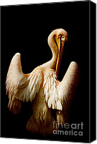 Animal Mixed Media Canvas Prints - The pelican Canvas Print by Angela Doelling AD DESIGN Photo and PhotoArt