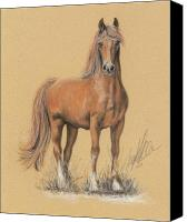 Equestrian Pastels Canvas Prints - The Peruvian Paso Fino  Canvas Print by Terry Kirkland Cook