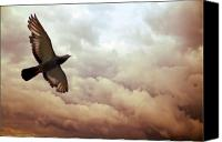 Spiritual Photo Canvas Prints - The Pigeon Canvas Print by Bob Orsillo