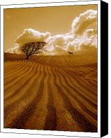 Ploughed Canvas Prints - The Ploughed Field Canvas Print by Mal Bray