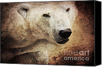 Polar Bear Canvas Prints - The polar bear Canvas Print by Angela Doelling AD DESIGN Photo and PhotoArt