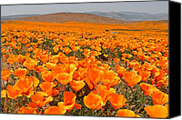 Fields Canvas Prints - The Poppy Fields - Antelope Valley Canvas Print by Peter Tellone