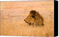 Lion Canvas Prints - The Pride Canvas Print by Adam Romanowicz