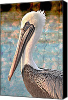 Pelicans Canvas Prints - The Prince Canvas Print by Debra and Dave Vanderlaan
