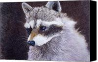 Raccoon Drawings Canvas Prints - The Raccoon Canvas Print by Tim Ernst