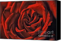 Arts Edge Canvas Prints - The Red Rose Canvas Print by H Scott Cushing