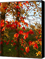 Fall Scenes Canvas Prints - The Reds of Autumn Canvas Print by Julie Dant