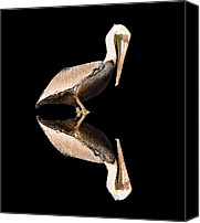 Low Country Canvas Prints - The Reflection of a Pelican Canvas Print by Scott Hansen