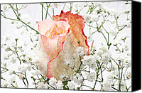 Closeup Mixed Media Canvas Prints - The Rose Canvas Print by Andee Photography