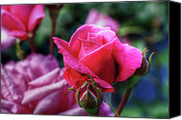 Matthew Green Canvas Prints - The Rose Canvas Print by Matthew Green