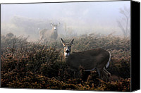 Jim Cumming Canvas Prints - The Rut is On Canvas Print by Jim Cumming