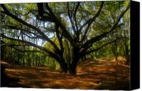 Florida - Usa Canvas Prints - The Sacred Oak Canvas Print by David Lee Thompson