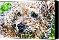 Handsome Canvas Prints - The Scruffiest Dog In The World Canvas Print by Meirion Matthias