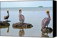 Pelicans Canvas Prints - The Sentinels Canvas Print by Kenneth Albin