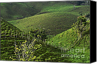 Rural Scenes Canvas Prints - The Soft Hills of Caizan Canvas Print by Heiko Koehrer-Wagner