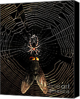 Spider Web Canvas Prints - The Spider  And The Fly Canvas Print by Wingsdomain Art and Photography