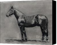Pdjf Canvas Prints - The Standardbred Canvas Print by Thomas Allen Pauly