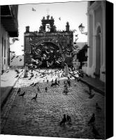 Old San Juan Canvas Prints - The Street Pigeons Canvas Print by Perry Webster