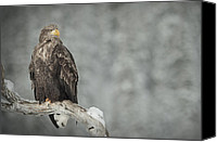 Eagle Watching Canvas Prints - The Surveyor Canvas Print by Andy Astbury