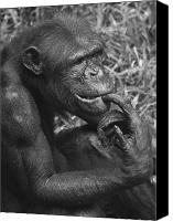 Chimpanzee Canvas Prints - The Thinker Canvas Print by Zoe Ferrie