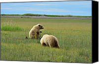 Kodiak Canvas Prints - The View is Great Canvas Print by Dennis Blum