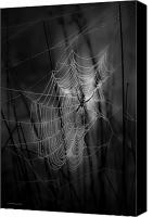 Spider Web Canvas Prints - The Weaver Canvas Print by Ron Jones
