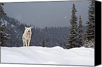 Pines Canvas Prints - The Wolf Canvas Print by Evgeni Dinev