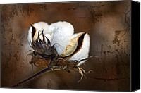 Layered Canvas Prints - Them Cotton Bolls Canvas Print by Kathy Clark