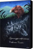Endangered Canvas Prints - Ther California Condor... Canvas Print by Will Bullas