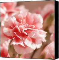 Carnation Canvas Prints - Think Pink Canvas Print by Kim Hojnacki
