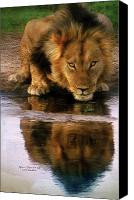 Lion Mixed Media Canvas Prints - Thirst For Life Canvas Print by Carol Cavalaris