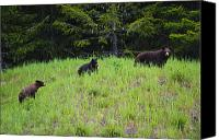 Black Bear Cubs Canvas Prints - This is British Columbia No.50 - Black Bear Mother and Cubs Canvas Print by Paul W Sharpe Aka Wizard of Wonders