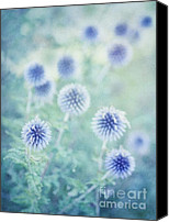 Feminine Canvas Prints - Thistle Dreams Canvas Print by Priska Wettstein