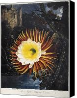 Cereus Canvas Prints - Thornton: Cereus Canvas Print by Granger